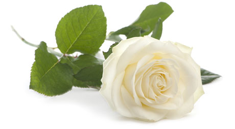 Cremations, burials, affordable funerals
