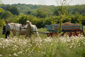 Natural Burial Funeral | White Rose Modern Funerals