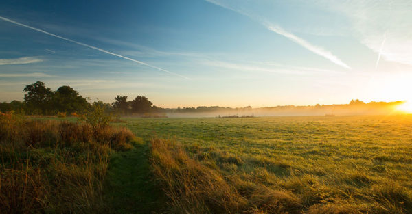 Difference between a cemetery burial and a natural burial